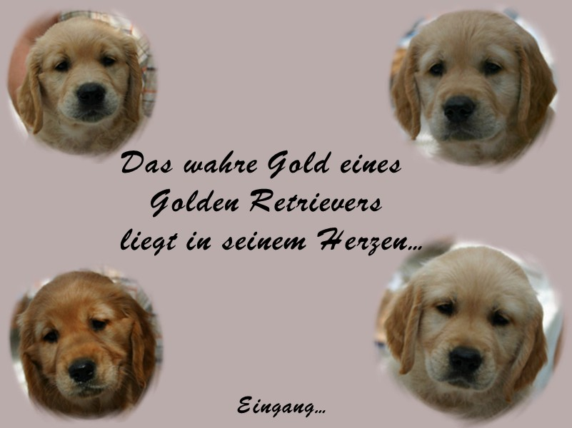 Dunfield Golden Retriever Zucht von Alexandra Logemann