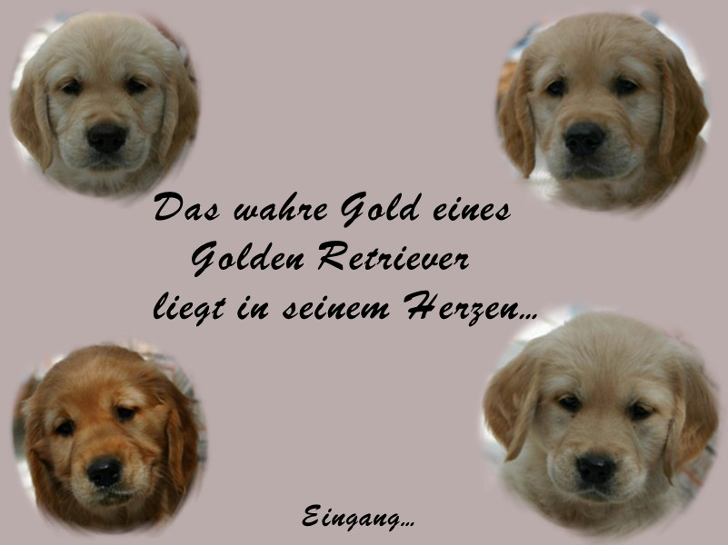 "Golden Retriever Zucht ""Dunfield"" - Alexandra Logemann"